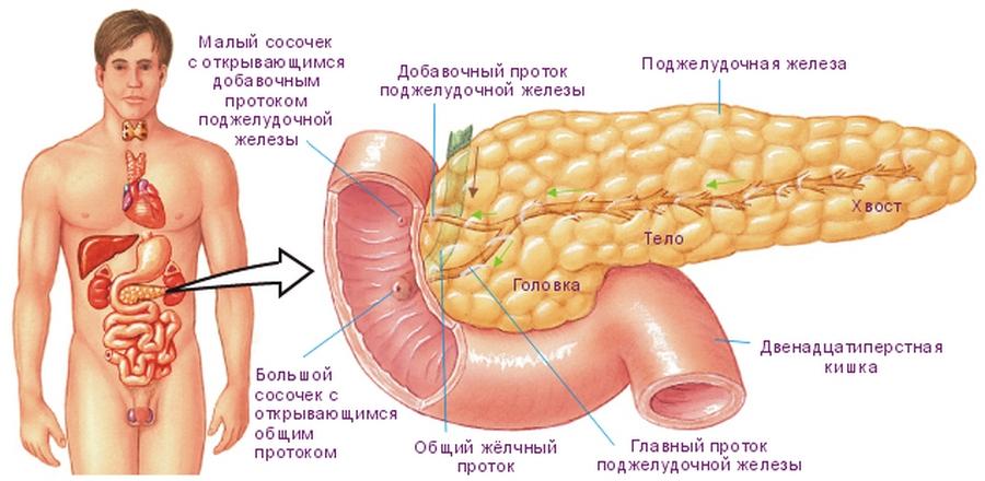 Влияет-ли поджелудочная железа на потенцию