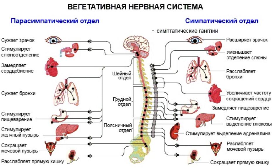 Как восстановить нервную систему чем ее лечить