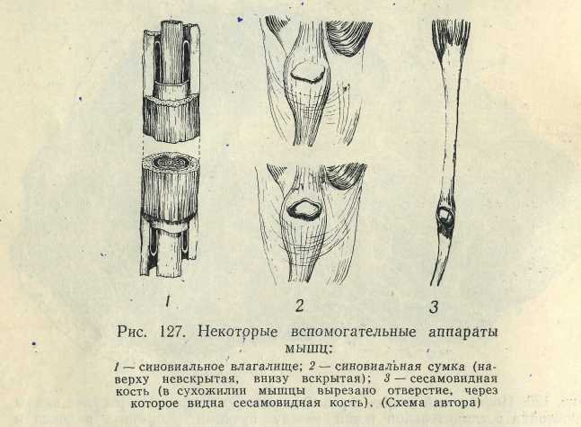 массаж при артрите плечевого сустава